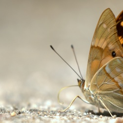 Butterflies<br>&nbsp;&nbsp;&nbsp;Nymphalidae( The Brush-Footed )<br>
