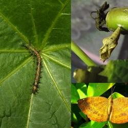 Nymphalidae - Brushfooted