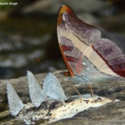 Butterfly Behavior
