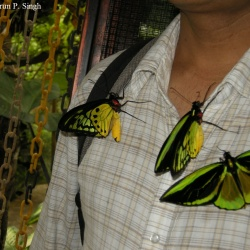 Butterfly Park in Bali Island of Indonesia